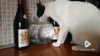 Cat drinks from fish bowl - Video