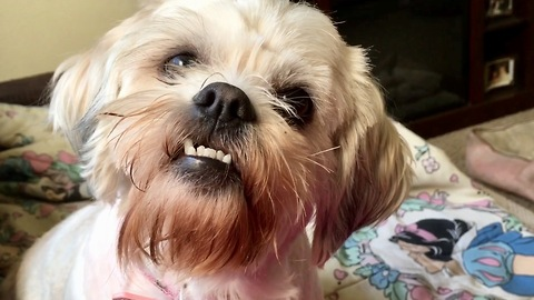 The most adorable underbite ever