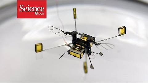These 'robo-bees' can dive, swim, and jump