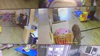 Deer Crashes Into Day Care Center - Video