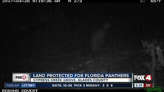 Land protected for Florida panthers - Video