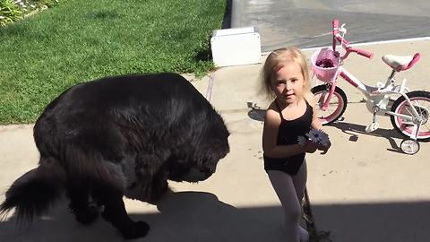 Ballerina runs out of treats for her giant puppy