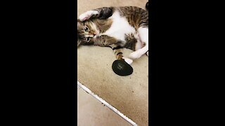 Cat Totally Freaks Out When Given Avocado