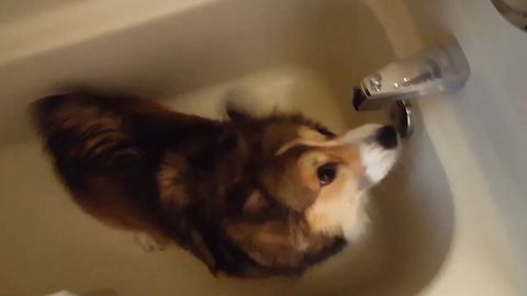 6 Times This Doggo LOSES IT Over Shower Time