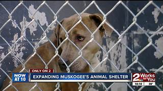 Muskogee animal shelter looking to expand - Video