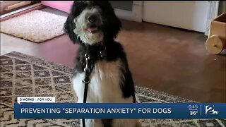 Mindful Moment with Mike: Preventing 'Separation Anxiety' for Dogs