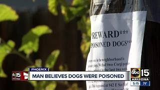 Valley neighborhood on edge after two dogs were poisoned - Video