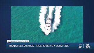 Manatees almost run over by boaters