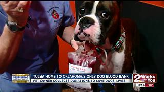 Tulsa home to Oklahoma's only dog blood bank - Video