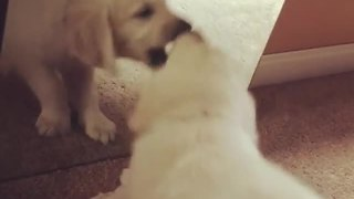 Puppy's Precious First Encounter With Mirror Reflection - Video