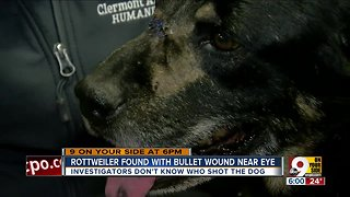 Dog found with bullet wound near eye