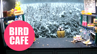 Wildlife photgrapher builds snack bar for the birds - Video