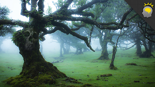 Stuff to Blow Your Mind: When Trees Attack - Science on the Web - Video