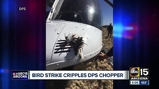 DPS pilot had dangerous encounter after flying into flock of birds - Video