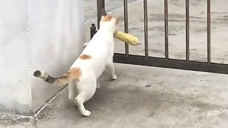Hilarious..!! Cat Can't Trough The Gate With Mouth Carrying a Food - Video