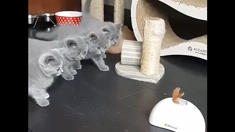 Kittens Cautiously Approach Toy Together