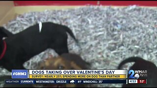 Survey: dogs are taking over Valentine's Day