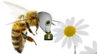 Exhaust Fumes Affecting Honeybees - Video