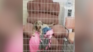 CUTE! Shelter dogs relax in donated leisure chairs - ABC15 Digital - Video
