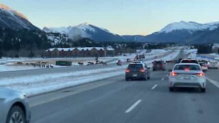 Canadian police halt traffic to allow deer herd to cross highway