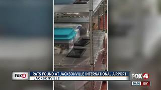 Rat Traps Found at Jacksonville International Airport - Video