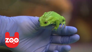 Animal Check-Up At London Zoo - Video