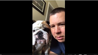 Bulldog sees video of himself, attacks it!  - Video