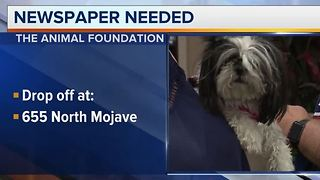 Animal Foundation needs newspapers - Video