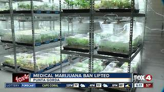 Medical marijuana ban lifted in Punta Gorda