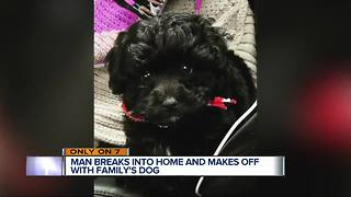 Puppy stolen from front window of Detroit condo, family concerned - Video