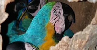 Tropical birds hanging out in hollow tree trunk