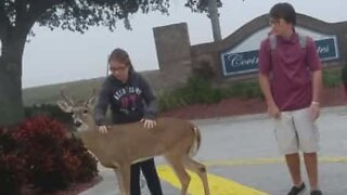 Friendly deer plays with children