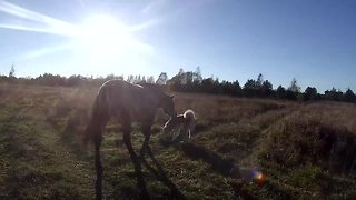 Dog and horse enjoy sunny afternoon walk together