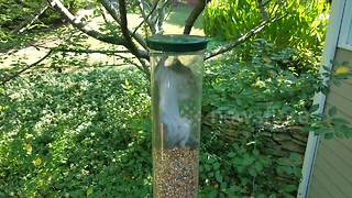 Greedy squirrel gets trapped in bird feeder - Video