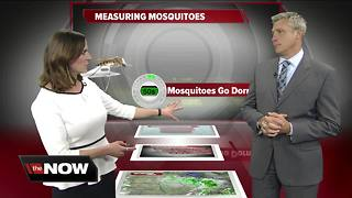 Geeking Out: Measuring mosquitoes - Video