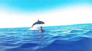 False Killer Whale Puts on a Show for Divers - Video