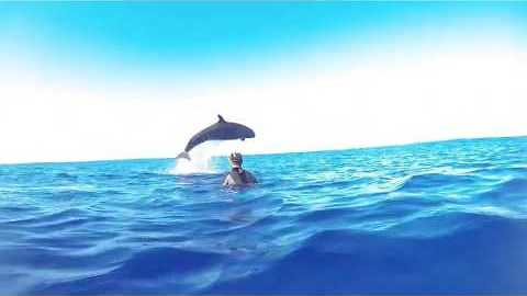Killer Whale Puts on a Show for Divers