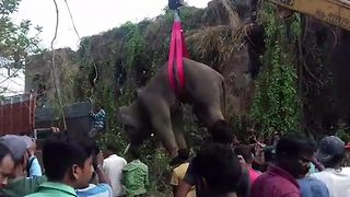 Adult elephant is tranquillised, lifted by crane and put onto transporter truck - Video