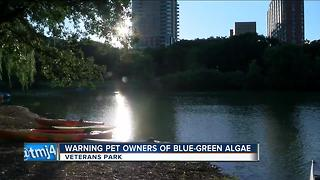 Blue-green algae found at Veteran's Park lagoon - Video