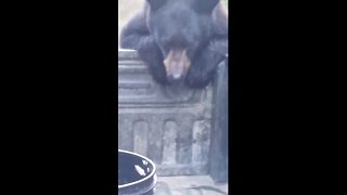Man Chases Bear That Stole His Backpack - Video