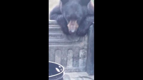 Man Chases Bear That Stole His Backpack