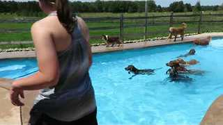 Group of Dogs Have Time of Their Lives in Swimming Pool - Video