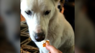 Spoiled Pup Eats Only Crackers Dipped In Cream Cheese - Video
