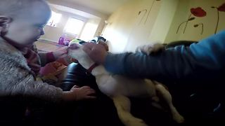Little girl loves to cuddle with her beagle - Video