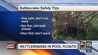Buckeye family finds rattlesnakes inside p - Video