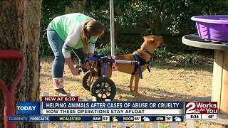 Helping animals after cases of abuse or cruelty