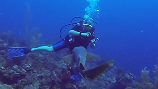 Nurse sharks: Adorable puppies of the deep - Video