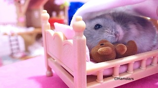 Hamster bedtime is the most precious thing you'll see today - Video