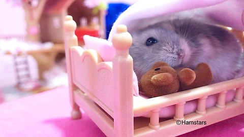 Hamster bedtime is the most precious thing you'll see today