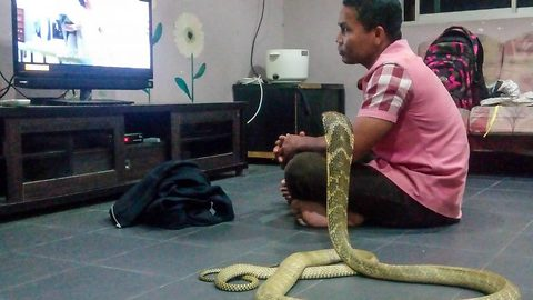 Snake whisperer reads and plays football with cobras